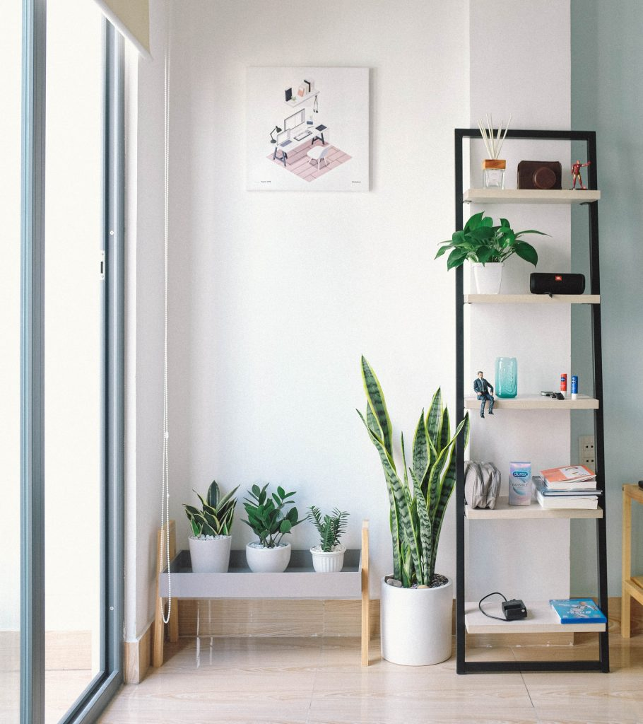 white wall with green plants